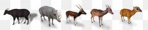 Zoo Tycoon 2 - Zoo Tycoon 2: African Adventure Antelope Even-toed Ungulates Animal PNG