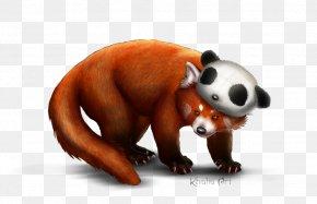 Red Panda Picture - Red Panda Giant Panda Bear Cat PNG