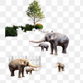 Big Nose Like - Indian Elephant African Elephant Zebra PNG