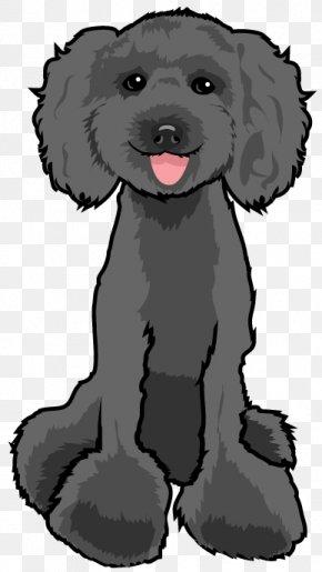 Poodle Dog - Schnoodle Puppy Poodle Dog Breed Companion Dog PNG
