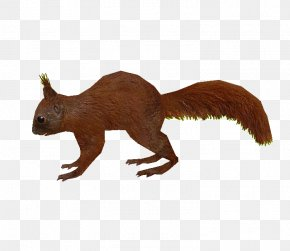Squirrel - Zoo Tycoon 2: Extinct Animals Squirrel Rodent PNG