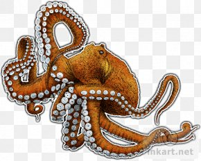 Octopus Cartoon - Giant Pacific Octopus The Love Letter Cephalopod Art PNG