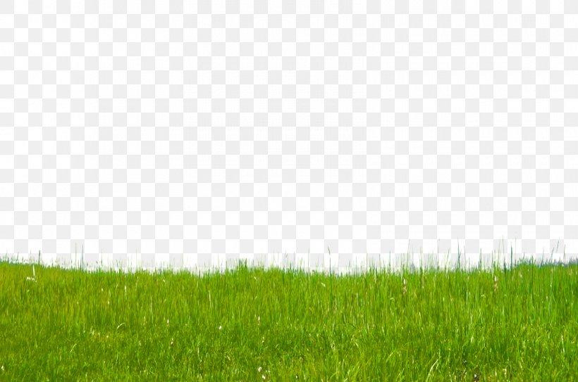 Stock Photography DeviantArt Digital Art, PNG, 1600x1060px, Stock Photography, Agriculture, Art, Crop, Deviantart Download Free