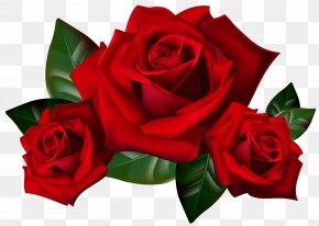 Rose Clipart - Rose Clip Art PNG