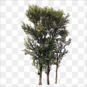 Trees - Tree Branch Trunk PNG