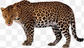 Leopard - Leopard Jaguar Cheetah Clip Art PNG