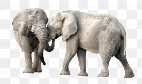 Elephant - African Elephant PNG