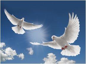 DOVE - Columbidae Funeral Home Obituary Clip Art PNG