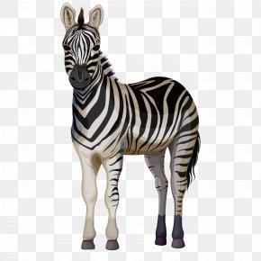 Cartoon Zebra - Quagga Horse Zorse Zebra PNG