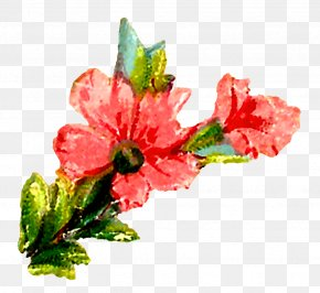 Watercolor Flower - Cut Flowers Floral Design Watercolor Painting Clip Art PNG