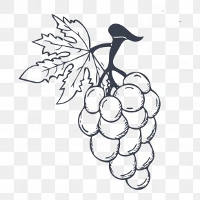 A Bunch Of Grapes - Ice Cream Wine Grape PNG