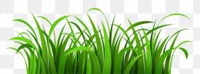 Grass Patch Clipart - Blog Clip Art PNG