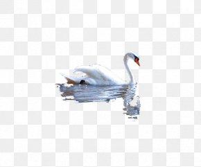 White Water Goose - DeviantArt PNG