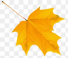 Yellow Autumn Leaf Clipart Image - Autumn Leaf Color Yellow Clip Art PNG