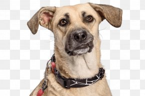 Dog - Dog Breed Dog Collar Snout PNG