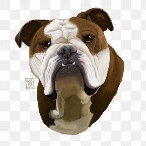 Bulldog - Olde English Bulldogge Toy Bulldog American Bulldog Old English Bulldog PNG