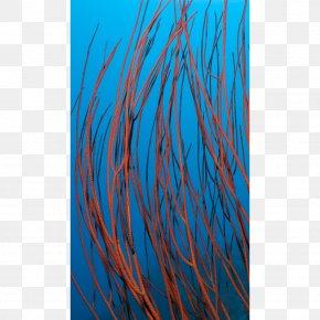 Shoal Of Fish - Turquoise Electric Blue Aqua Teal Cobalt Blue PNG