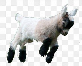 Goat - Goat Simulator Boer Goat Fainting Goat American Lamancha Goat Pygmy Goat PNG