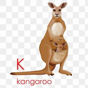 Creative English Kangaroo - Kangaroo Cartoon Drawing Illustration PNG