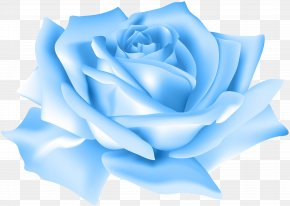 Blue Rose Flower Clip Art Image - Blue Rose Flower Beach Rose Clip Art PNG