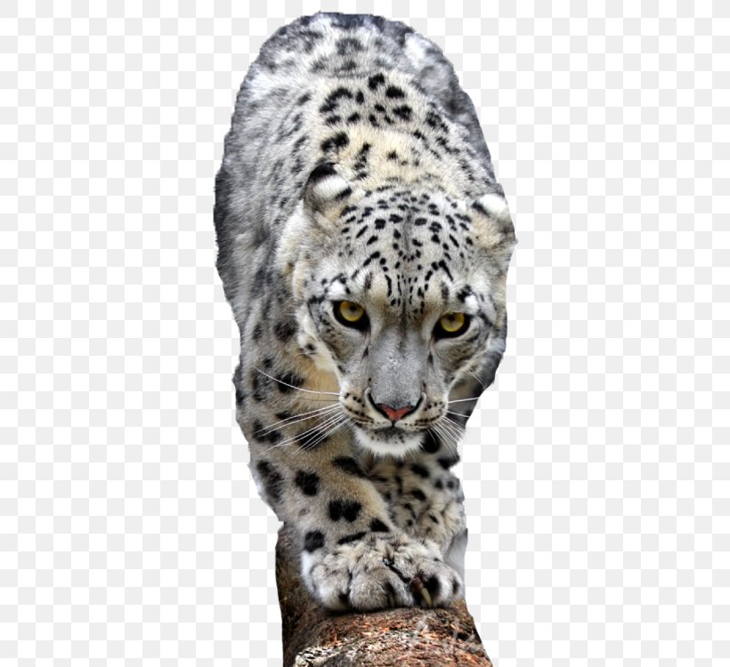 Snow Leopard Lion Cheetah Tiger, PNG, 500x750px, Leopard, Animal, Animal Sauvage, Big Cat, Big Cats Download Free