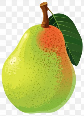 Pear Vector Clipart Image - Asian Pear Clip Art PNG