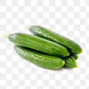 Cucumber - Pickled Cucumber Fruit Vegetable Melon PNG