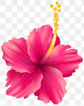 Pink Exotic Flower Transparent Clip Art Image - Flower Clip Art PNG
