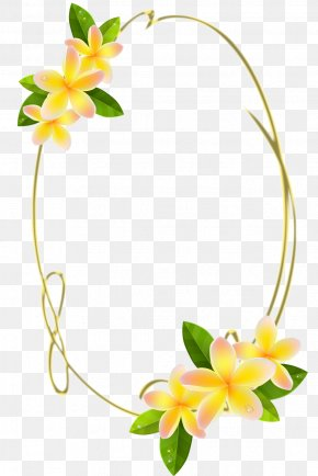 Oval - Frangipani Royalty-free Stock Photography Clip Art PNG