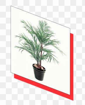 Areca Palm - Date Palm Areca Palm Flowerpot Houseplant Arecaceae PNG