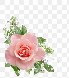 Watercolor Rose - Rose Flower Pink Clip Art PNG