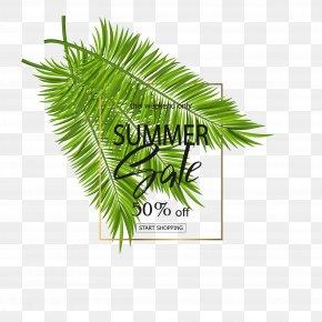 Green Coconut Leaves Leaves Free - Arecaceae Leaf Poster PNG