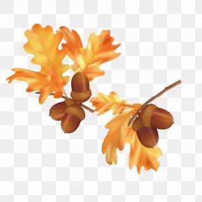 Fall Leaves Pictures - Autumn Leaf Color Autumn Leaf Color Euclidean Vector PNG