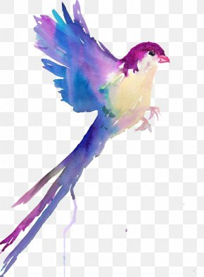 Birds - Bird Watercolor Painting Drawing Sketch PNG