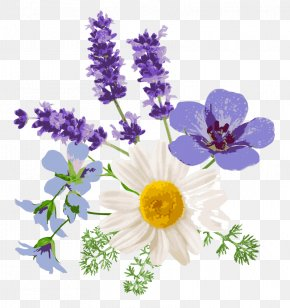 Lavender - English Lavender Floral Design Chamomile French Lavender Flower PNG