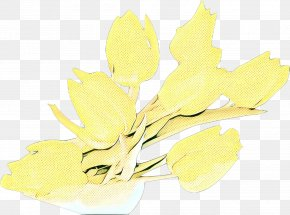 Herbaceous Plant Flower - Leaf Branch PNG