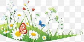 Chamomile - Seasons For Children (summer) Clip Art PNG