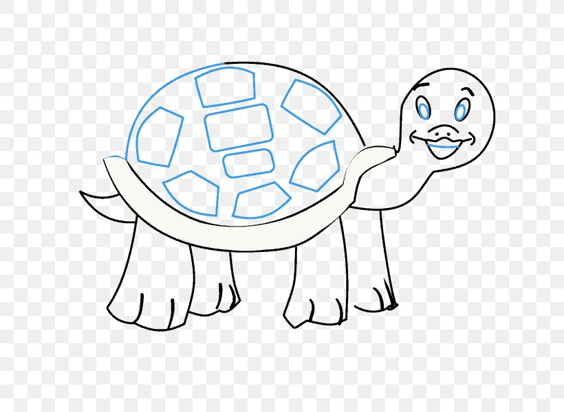 Drawing Cartoon Draw 50 Animals Tortoise Png 678x600px