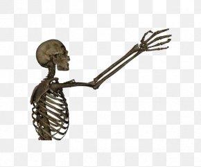 Skull Skeleton - Human Skeleton Arm Bone Clip Art PNG