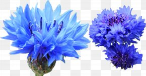 Cornflower Blue - Cornflower Blue Cornflower Blue Indigo Dye PNG