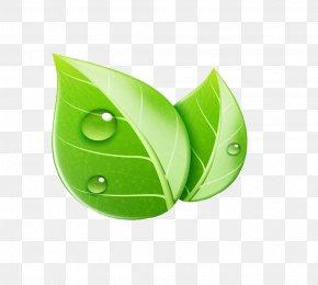 Leaf - Leaf Royalty-free Ecology Illustration PNG