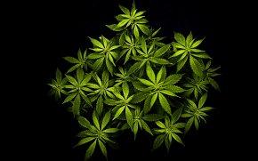 Cannabis - Cannabis Desktop Wallpaper High-definition Video High-definition Television Hemp PNG