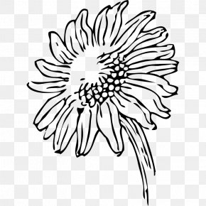 Sunflower Line Art - Common Sunflower Free Content Clip Art PNG
