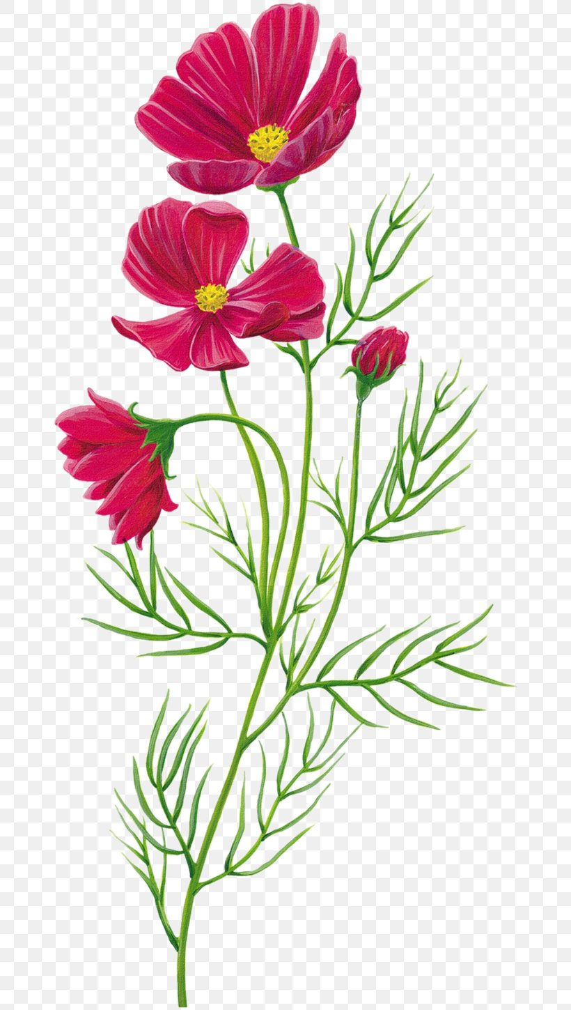 Flower, PNG, 670x1449px, Flower, Animation, Annual Plant, Chrysanths, Cosmos Download Free