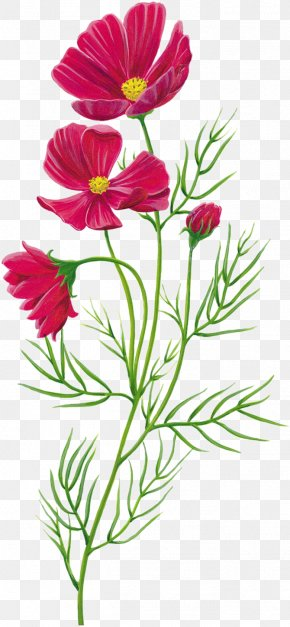Red - Flower PNG