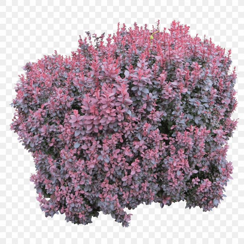 Shrub Computer File, PNG, 2902x2902px, Shrub, Annual Plant, Flower, Groundcover, Image File Formats Download Free