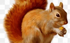 Ice Age Squirrel Carlos Saldanha - Chipmunk Red Squirrel Rodent Tree Squirrel Eastern Gray Squirrel PNG