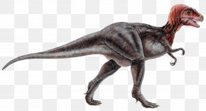 Cretaceous Dinosaur - Dinosaur Museum Tyrannosaurus Dinosaur Park Reptile PNG