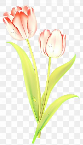 Lily Family Pedicel - Lily Flower Cartoon PNG