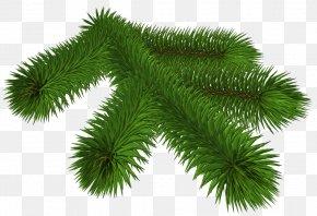 Transparent Pine Branch 3D Clipart - Pine Branch Clip Art PNG